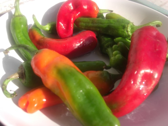 Italian sweet peppers